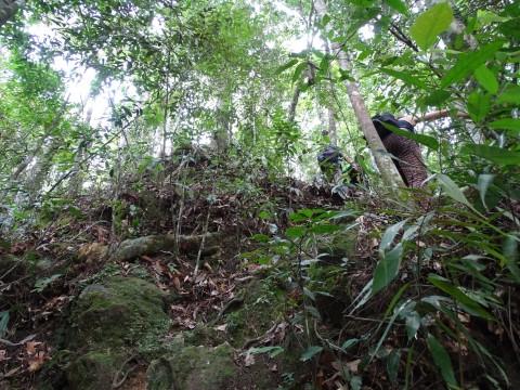 Het pad door de jungle
