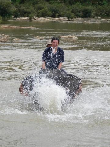 Olifant wassen