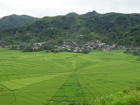 Spinnenweb rijstvelden